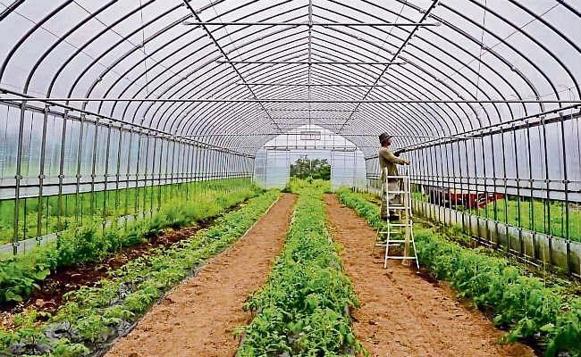 कृषिमा विदेशी लगानी खुला